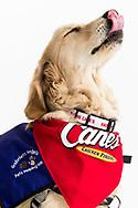 PHOENIX, AZ - MAY 9: D-backs and Raising Cane's new therapy dog Brenly (Photo by Sarah Sachs/Arizona Diamondbacks)