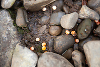 Salmon eggs decomposing on streambed. Salmon feed entire ecosystems when they return to their natal rivers. From animals to humans to insects to streamside vegetation.