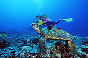 diver and green sea turtle, Chelonia mydas, being cleaned by gold-ring surgeonfish, Ctenochaetus strigosus, Turtle Pinnacles, Kona, Big Island, Hawaii ( Pacific ) MR 266