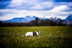Field near Srathallan Castle, Perthshire, Scotland.