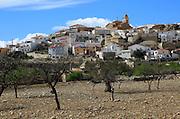 Fruit trees growing in farmland, village of Uleila del Campo, Almeria, Spain