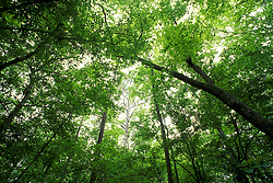 Stock photo looking at the sky in a heavily wooded area
