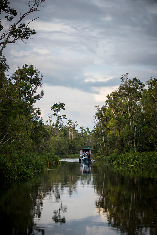 Central Kalimantan, Indonesia - March 5, 2017: A boat carrying tourists travels a waterway in Tanjung Puting National Park, located in Indonesia's Central Kalimantan province. The park is a popular destination to see orangutans.