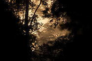 A photograph of dawn fog through lowland dipterocarp forest in Danum Valley, Sabah, Malaysia.
