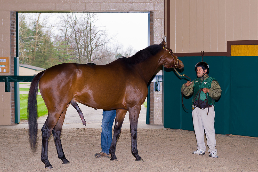 Breeding thoroughbred horses (Spring at Last (stallion) and Little Bonnet (mare)), Winstar Farm (thoroughbred horse farm), Versailles (near Lexington), Kentucky USA