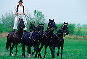 Man riding on wild horses on the Great Hungarian Plain at Bugac, Hungary