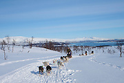 Alaskan Huskies dog-sledding at Villmarkssenter wilderness centre on Kvaloya Island, Tromso in Arctic Circle, Northern Norway