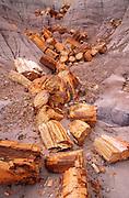 Petrified log sections in ravine on Blue Mesa, Petrified Forest National Park, Arizona