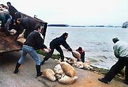 Nederland, Ooij, 01-02-1995Eind januari, begin februari 1995 steeg het water van de Rijn, Maas en Waal tot record hoogte van 16,64 m. bij Lobith. Een evacuatie van 250.000 mensen was noodzakelijk vanwege het gevaar voor dijkdoorbraak en overstroming. op verschillende zwakke punten werd geprobeerd de dijken te versterken met zandzakken. Hier in de Ooijpolder bij Nijmegen.Late January, early February 1995 increased the water of the Rhine, Maas and Waal to a record high of 16.64 meters at Lobith. An evacuation of 250,000 people was needed because of flood risk. At several points people tried to reinforce the dikes with sandbags. Here in the Ooijpolder in Nijmegen.Foto: Flip Franssen/Hollandse Hoogte