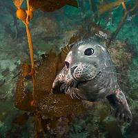 Sealife - California