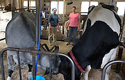 Joan Wortman, left, and Amy Deome, right, watch Dolly, the Green Acres blue roan, left, and a Premier View Holstein, right, butt heads after being introduced into adjacent stalls in South Randolph,Vt., Saturday, May 21, 2016. Unable to part with Dolly, who had been slated for slaughter, the Deome family welcomed Joan to keep her in the barn as long as she liked, while also hoping that her position as matriarch in the Green Acres herd would help lead the new herd to pasture and introduce them to a new routine. (Valley News - James M. Patterson) Copyright Valley News. May not be reprinted or used online without permission. Send requests to permission@vnews.com.