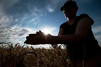 Wies Siekierki, woj podlaskie, 29.06.2018. Podlaskim rolnikom doskwiera wyjatkowa w tym roku susza . W niektorych rejonach wojewodztwa deszcz nie padal juz od miesiaca; N/z zbiory moga byc w tym roku slabe fot Michal Kosc / AGENCJA WSCHOD