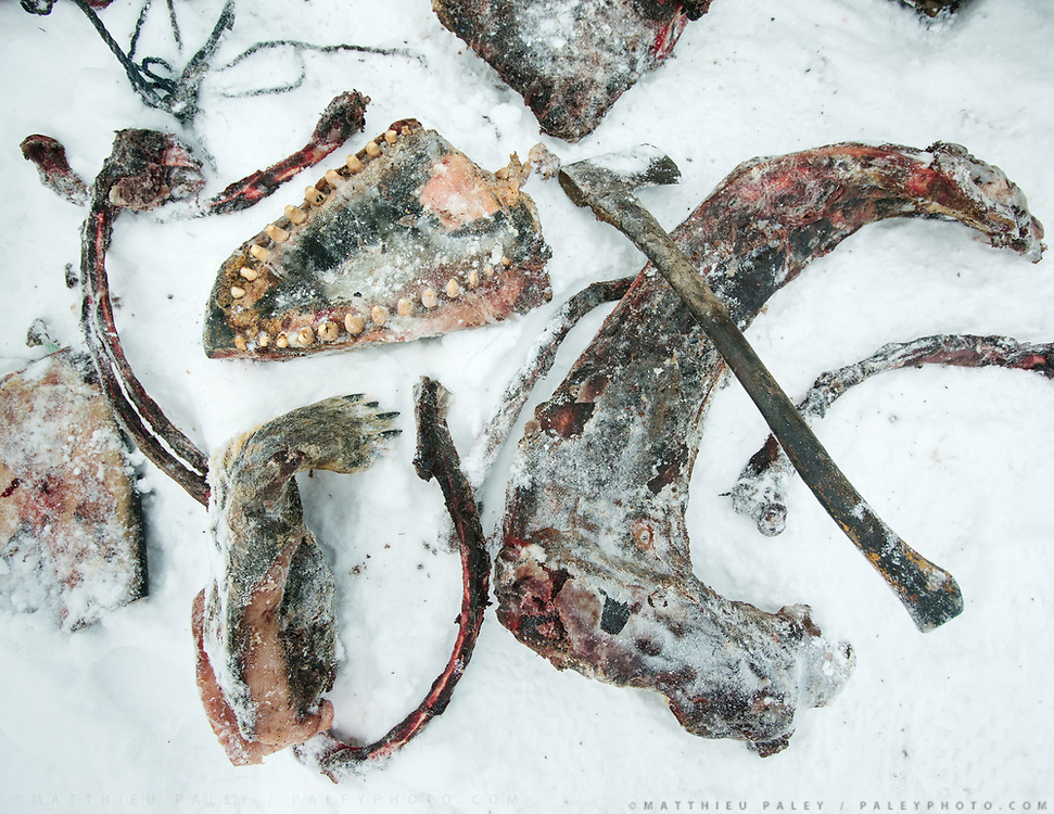 Meat from Killer whale, narwhal, bearded seal and seal. Bent Igniatiussen is getting food for his family as well as for his sled dogs, in a wodden box placed at the edge of the settlement. Life in and around the small Inuit settlement of Isortoq (population of 64), in East Greenland.