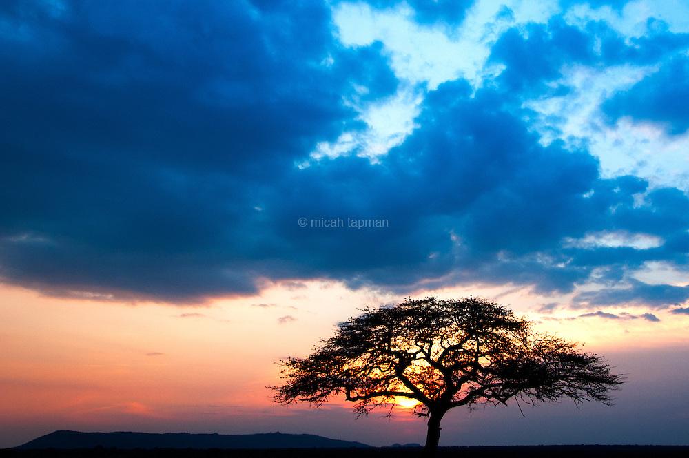 Sunset over the Serengeti in Tanzania