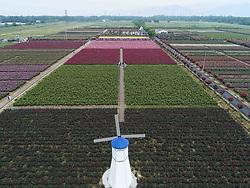 April 27, 2018 - Hangzhou, Hangzhou, China - Hangzhou, CHINA-27th April 2018: Scenery of Xinsha Island Rose Park in Hangzhou, east China's Zhejiang Province, April 27th, 2018. (Credit Image: © SIPA Asia via ZUMA Wire)
