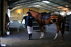 23rd November 2017 - Michael Owen Horse Racing - Former footballer Michael Owen prepares to take to the gallops at Manor House Stables in Cheshire ahead of his first ever race as a jockey - Photo: Simon Stacpoole / Offside.