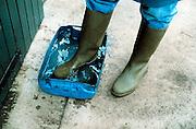 Nederland, Noord Limburg, 1-4-2000Ontsmetting schoeisel van bezoeker boeren erf.Veehouder. BSE, Mond en klauwzeer, Foto: Flip Franssen/Hollandse Hoogte