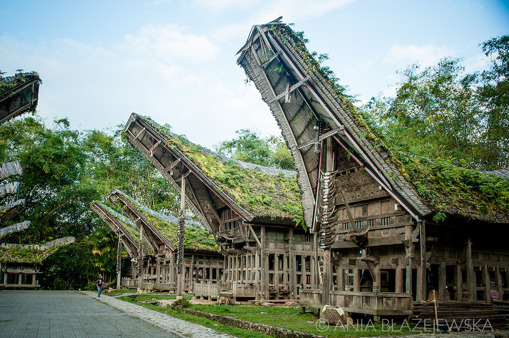 Indonesia, Sulawesi, Tana Toraja. Ke'te Kesu - a traditional village.<br /> <br /> Tana Toraja, situated in the south of Sulawesi, sometimes reminds alive museum full of traditional boat-shaped houses painted with Torajan patterns, burial caves or hanging graves guarded by tau tau (a deceased shaped wooden sculptures(, all of them situated in a beautiful scenery of green rice terraces.