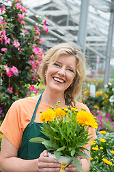 Female shop assistant holding yellow flower plant in garden centre, Augsburg, Bavaria, Germany