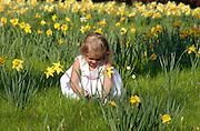 Daffodil Hill at the Botanic Gardens in Memphis, Tn. Elli Rose Focht (Model Release)