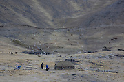 Lama and alpaca farmers by their house and flock just after dawn in the high Puna at approx 4000m in the Andes mountains