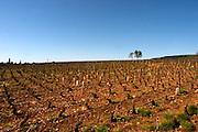 vineyard beaune cote de beaune burgundy france