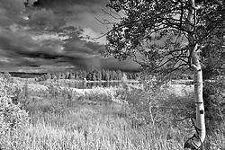 """Aspen tree, Thunter Storm, Grand Teton National Park<br /> <br /> For production prints or stock photos click the Purchase Print/License Photo Button in upper Right; for Fine Art """"Custom Prints"""" contact Daryl - 208-709-3250 or dh@greater-yellowstone.com"""