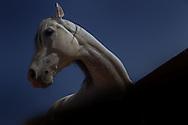 White horse against dark background.