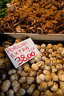 Porcini mushrooms - Ceps - Rialto vegetable market - Venice Italy
