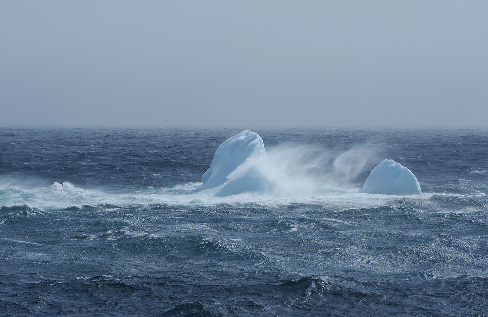 Ice floes in a stormy sea. Saunders Island, South Sandwich Islands. South Atlantic Ocean. 25Feb16
