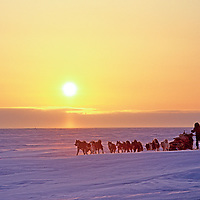 Polar explorer Will Steger mushes across the frozen Arctic Ocean, bathed in glow from the midnight sun.