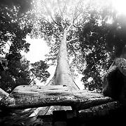 Angkor Wat, Tree