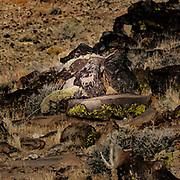 Petroglyph at entrance to Little Petroglyph Canyon, Kern County, California