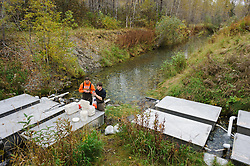 Dylan Burbank (right), and David Campbell, fish technicians for the non-profit Northern Southeast Regional Aquaculture Association, Inc. (NSRAA), measure and record the weight of eggs collected from chum salmon captured at the man-made spawning channels at Herman Creek, located near Haines, Alaska.  <br /> <br /> In 2014, 2.4 million eggs were seeded into these incubation boxes. The 2013 incubation box survival rate was 90%. Without the artificial spawning, natural survival is said to be only 10%.<br /> <br /> Weighing the eggs is the way technicians determine how many eggs are placed in the incubation boxes. After weighing, the eggs will be fertilized with the milt and then placed in the incubation boxes. Over the winter the fertilized eggs will develop into fry. The incubation process is 100% natural. Fry are not fed. Once they are big enough, the fish leave the incubation boxes on their own.<br /> <br /> Based in Sitka, Alaska, NSRAA conducts salmon enhancement projects in northern southeast Alaska. It is funded through a salmon enhancement tax (of three percent) and cost-recovery income. NSRAA also produces sockeye, chinook, and coho salmon.<br /> <br /> Male chum salmon return to Herman Creek to spawn with female chum salmon during the fall chum salmon run. The chum salmon return to freshwater Herman Creek, tributary of the Klehini River after living three to five years in the saltwater ocean. Spawning only once, chum salmon die approximately two weeks after they spawn. <br /> <br /> Chilkat River and Klehini River chum salmon are the primary food source for one of the largest gatherings of bald eagles in the world. Each fall, bald eagles congregate in the Alaska Chilkat Bald Eagle Preserve.