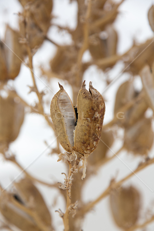 dried flowers in White Sands, NM
