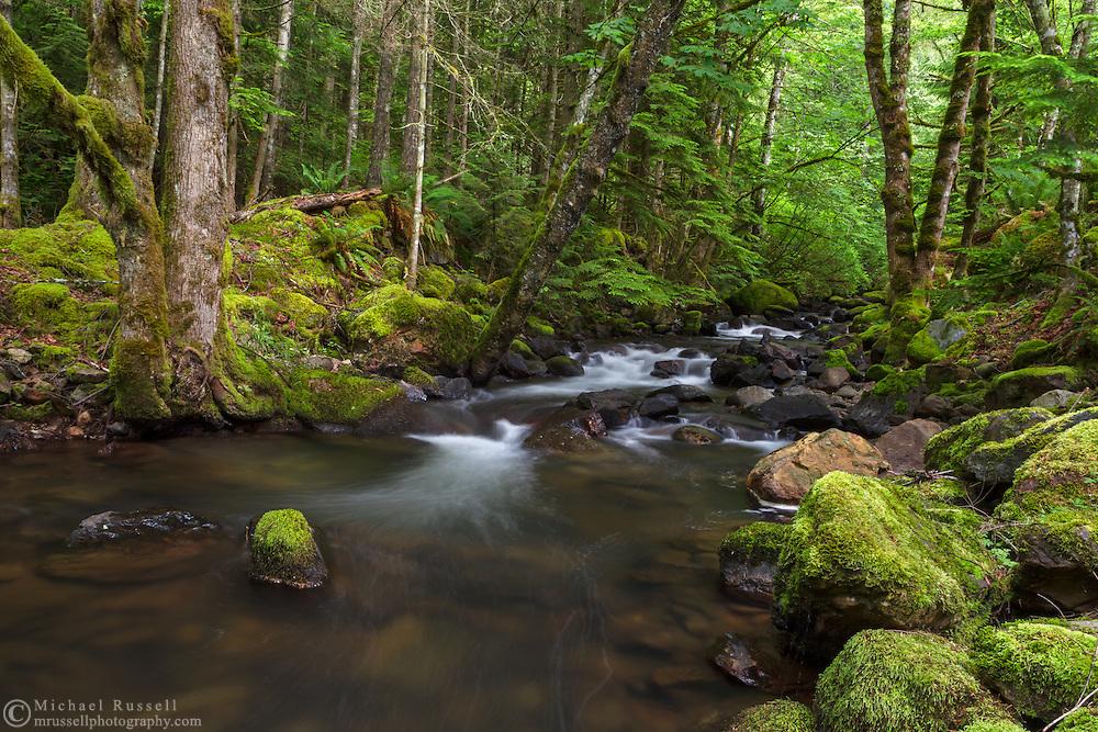 Trout Lake Creek in the rainforest at Sasquatch Provincial Park near Harrison Hot Springs, British Columbia, Canada