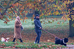 © Licensed to London News Pictures. 06/11/2020.  <br /> Greenwich, UK. Dog walkers surrounded by autumnal colour. People out and about in Greenwich Park, London making the most of their lockdown exercise on a cold November morning. Photo credit:Grant Falvey/LNP