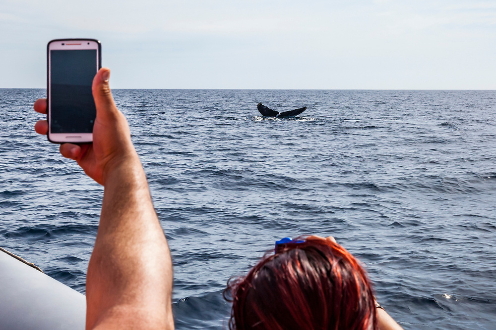 Tourists take pictures as the tail of a Humpback Whale submerges into the ocean off the coast of Cabo San Lucas, Baja California Sur, Mexico.