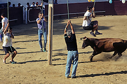 Community 'Bull Fighting' without killing the bull
