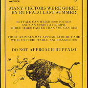 """""""Many visitors were gored by buffalo last summer..."""""""