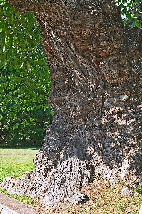 The sockerdricksträdet soda pop tree of Pippi Longstocking Nas. Vimmerby town Smaland region. Sweden, Europe.