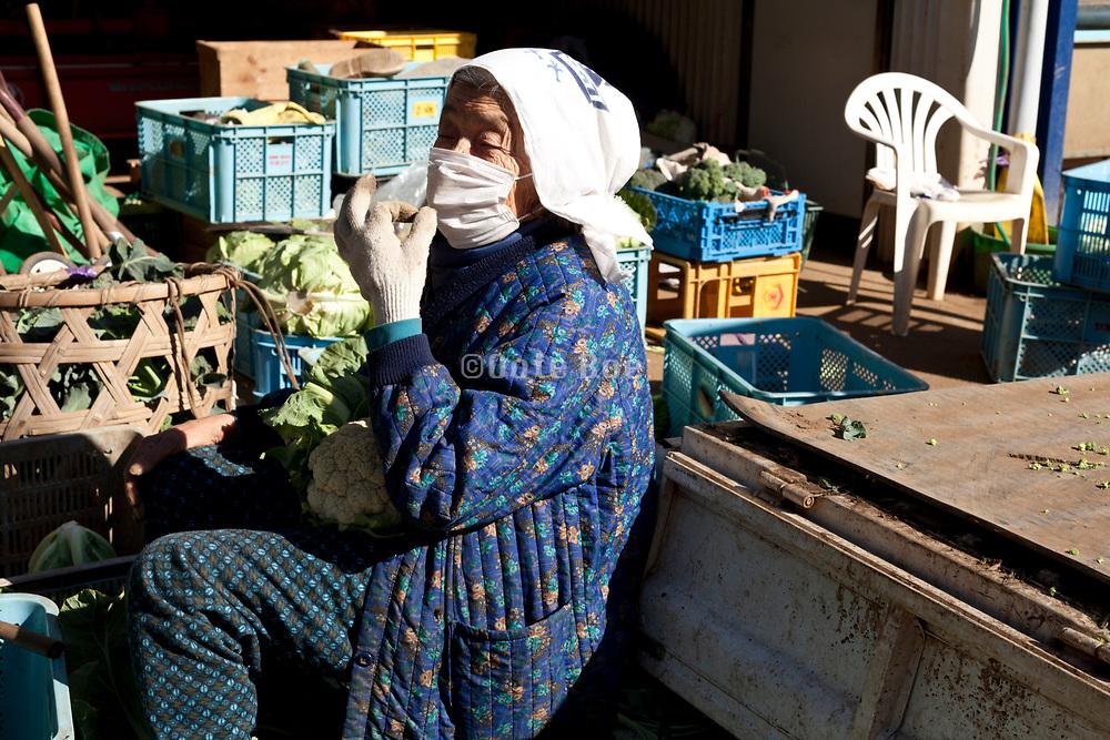senior Japanese woman working at a vegetable farm