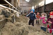 """Nederland, Herpen, 20090128...Kinderen bij de koeien in de stal. Hooi voeren aan de koeien..Kinderopvang 'Op de boerderij' in Herpen...""""OP DE BOERDERIJ"""" kinderopvang..is gevestigd bij een vleesveebedrijf te Herpen...In de stal met de koeien....Netherlands, Herpen, 20090128. ..Children with the cows in the barn. Giving hay to the cows...Childcare on the farm in Herpen. ..""""ON THE FARM"""" childcare ..is located at a beef farm in Herpen...In the stabls with the cows    .."""