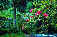 Indonesia, Sumatra. Bukit Lawang. Gunung Leuser National park. Red flowers hanging over the river.