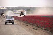 Crop dusting. Lompoc, California, USA. Spraying fields of flowers grown for seeds with pesticides.