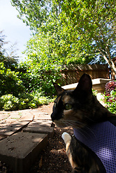 Zelda the cat bides her time in the yard behind her Oakland, Calif. home, Thursday, May 7, 2020. (Photo by D. Ross Cameron)