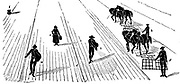 Crop Rotation: Sowing and harrowing corn. In Norfolk 4-course system, wheat planted first year, followed by turnips, then barley, often underplanted with grass or grass and clover ley to be used for hay or grazing in 4th year. Engraving 1855