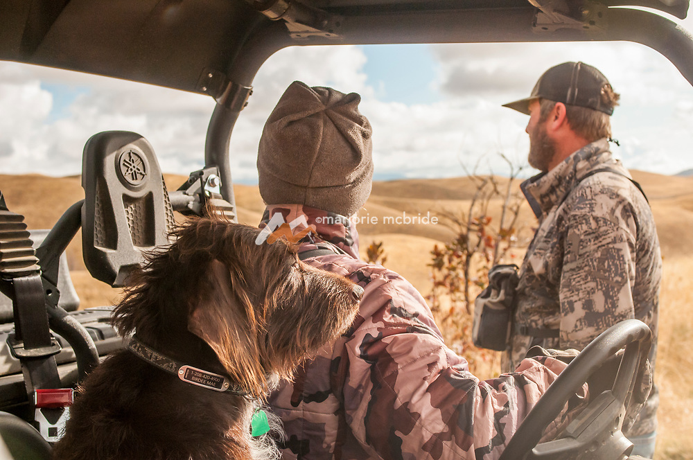 Hunters and pointing dog in UTV out in the field. Fairfield, Idaho.