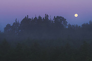 """Full moon (or so called harvest moon) over mixed bog and forest landscape in foggy late summer night, nature reserve """"Augstroze"""", Latvia Ⓒ Davis Ulands   davisulands.com"""