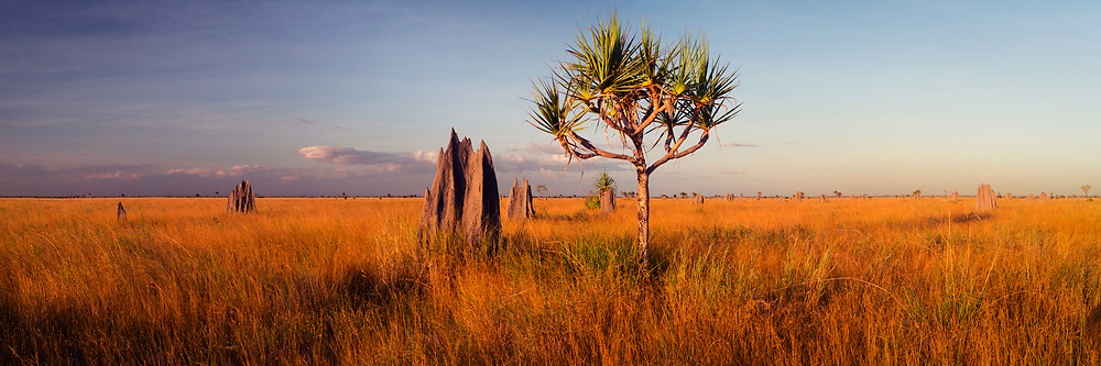 Late afternoon over the Nifold Plain, at Lakefield, Cape York Peninsula.<br /> <br /> Open Edition Print / Stock Image